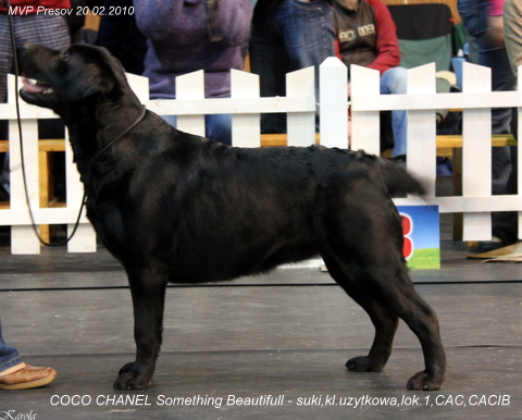 Coco Chanel Something Beautiful - V1, CAC, CACIB, East Winner 2010, trieda pracovná, suky